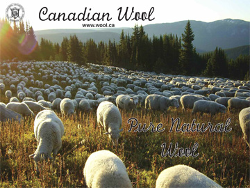 Canadian sheep in the mountains of British Columbia - Photo courtesy of Aveley Ranch - Vavenby, BC